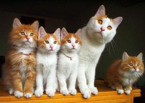 кошка с котятами смотрит в даль