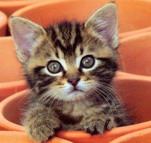 беспородный котенок