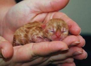 новорожденный котенок в руках у человека