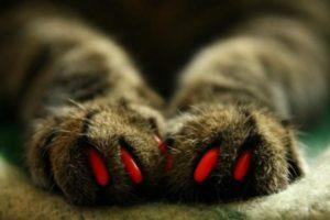 красные антицарапки на лапках у кошки