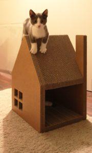 котенок залез на домик