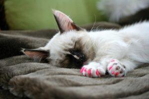 котенок с розовыми антицарапками