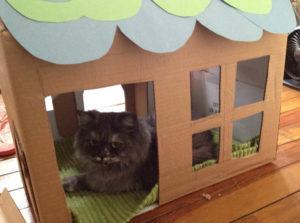 кот в картонном домике