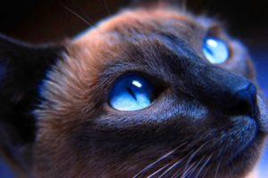 кошка смотрит в темноте