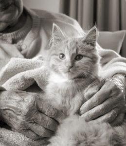 кошка лежит на пожилом человеке