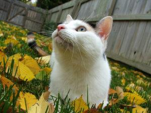 у кошки прыщи на подбородке