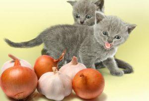 котята боятся лук и чеснок