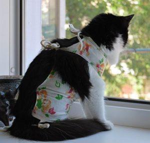 кошка в попоне смотрит в окно
