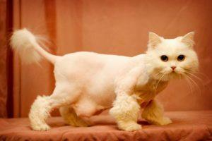стрижка кошки в салоне
