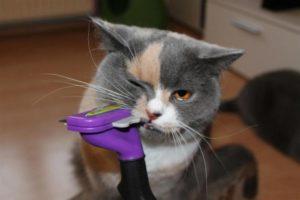 кот кусает фурминатор