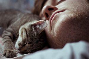 кошка спит в голове