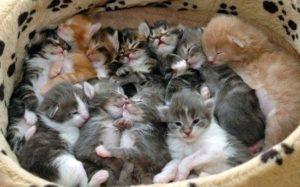много котят в лежанке
