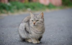грустный уличный кот