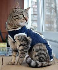 простерилизованная кошка