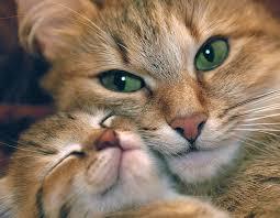 рыжая кошка с котенком