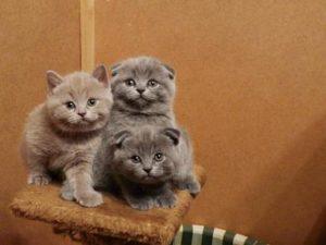 котята сидят на домике