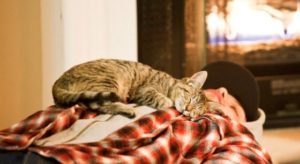 кошка спит на мужчине