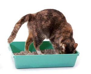 кот капается в лотке