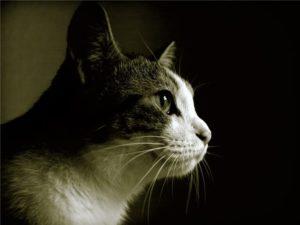 кошка сбоку
