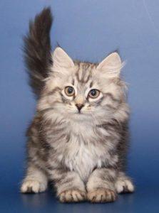 пушистый котенок смотрит в камеру