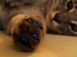 накладки на ногти для кошек