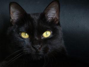 черная кошка с желтыми глазами