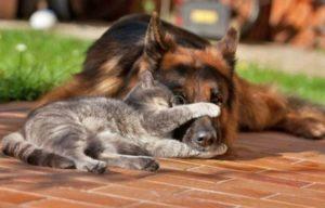 кошка и собака вместе спят