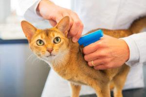 чипирование кошки