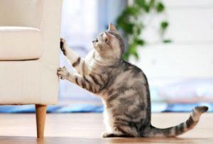 кот дерет диван