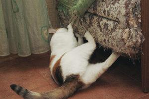 кошка ободрала весь диван