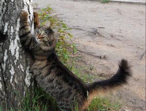 кот дерет дерево