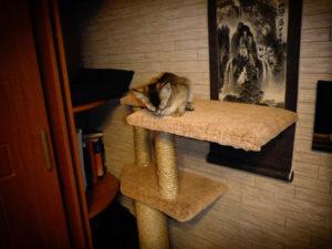 котенок сидит на самодельной когтеточке