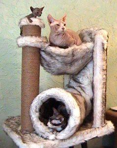 три кошки в домике