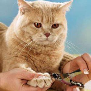 стрижка когтей рыжему коту