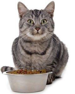 кот с миской сухого корма