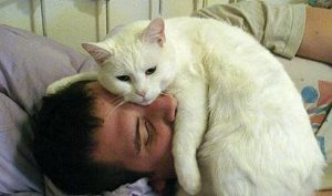 кошка лежит на лице человека