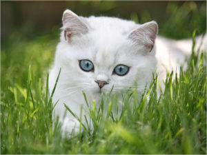 белая кошка в траве