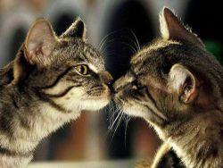 кот и кошка знакомятся
