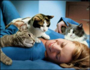 кошки лечат человека