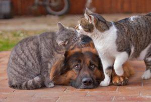 две кошки и собака