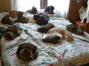 в квартире много кошек