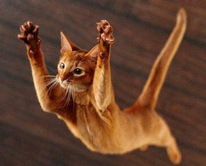 кошка падает с высоты
