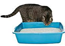 кошка нюхает лоток