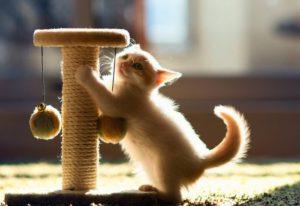 приучение котенка к когтеточке