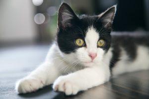 бело серый котенок