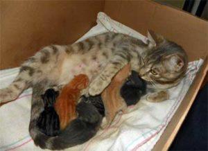 новорожденные котята едят молоко