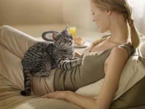 кошка лежит на женщине