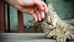 кошка чрезмерно ласковая