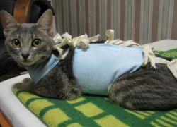 серая кошка в попоне