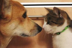 знакомство собаки и кошки